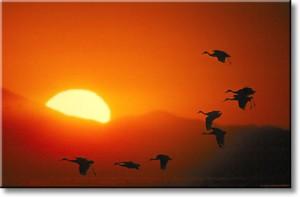 cranes_sunset